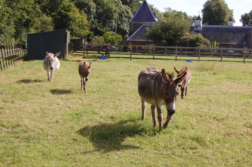 The Donkey Sanctuary, St Boswells - Emma's Picture Postcards