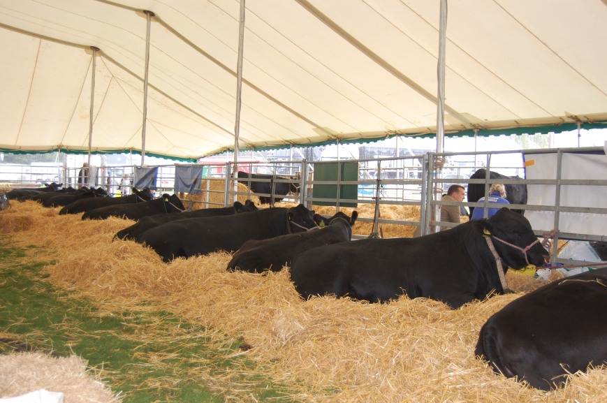 Border Union Show, Kelso - Emma's Picture Postcards