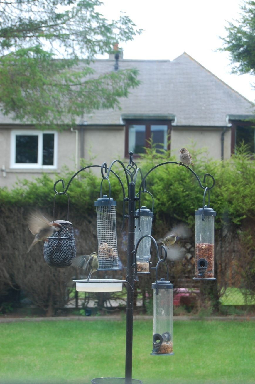 Garden Birds - Emma's Picture Postcards
