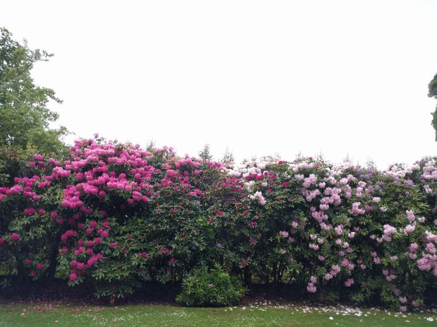 Hazlehead Park, Aberdeen - Emma's Picture Postcards